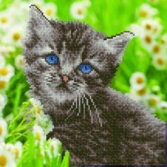 kitten - diamond dotz intermediate 50455 30,48x30,48cm