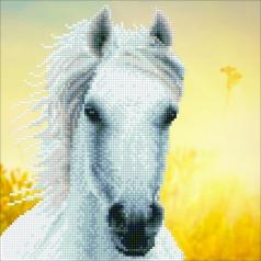 white horse - diamond dotz intermediate 50461 30,48x30,48cm