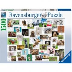 collage di animali divertenti - puzzle 1500 pezzi
