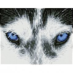 mystic husky - diamond dotz squares dq7.004 26x21cm