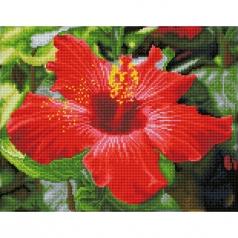 hibiscus in bloom - diamond dotz squares dq8.018 41x32cm