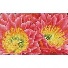 desert blooms - diamond dotz squares dq9.009 52x32cm