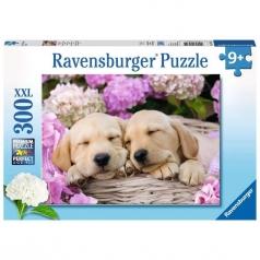 labrador sognanti - puzzle 300 pezzi xxl
